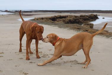 Hounah à la plage