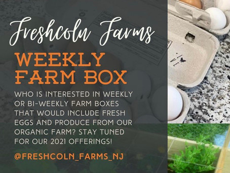 New for 2021: CSA Farm Boxes!