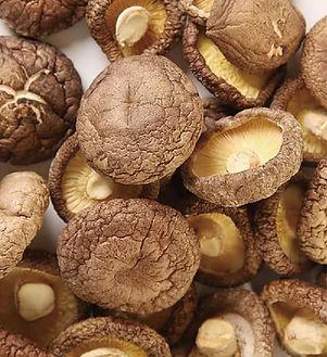 段木菇.jpg