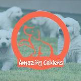 Oakley Puppies copy.jpg