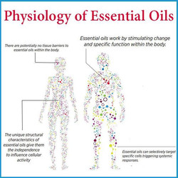 Physiology of oils