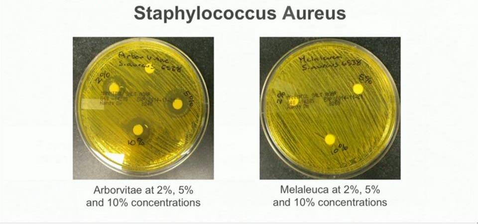 Arborvitae vs Staph