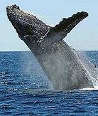 Whale sml.jpg