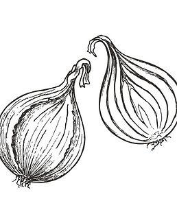Onion_edited.jpg