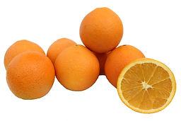 תפוז טבורי וושינגטון משתלת מוטשן