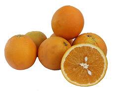 תפוז טבורי סמי משתלת מוטשן