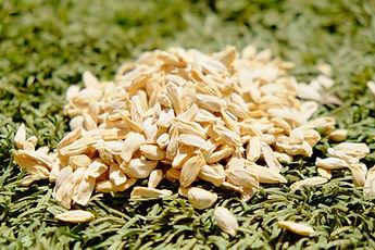 זרעי הדרים משתלת מוטשן
