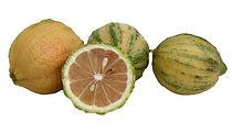 לימון מגוון משתלת מוטשן