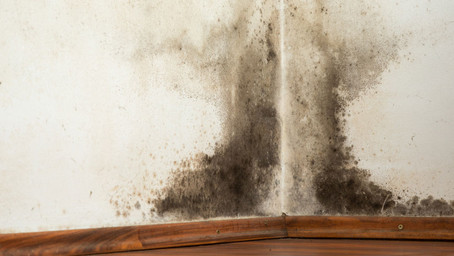 Mold, Microbes, Mental Health, & Neurodegenerative Disease – What everyone suffering NEEDS to know!