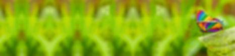 10--iStock_000017343628Large_bearb-neu.j