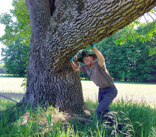 James Scarlata 60-inch Ash Tree