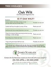 JamesScarlata_OakWilt_Chart.png
