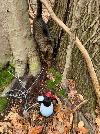 Tree Defend Hookup with Poly/Viton Valves on Beech Tree