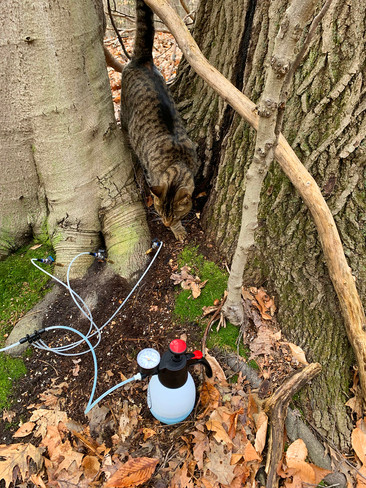 Tree Defend Hookup with Poly/Viton Valves on Beech Tree