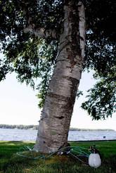 Tree Defend Near Lake