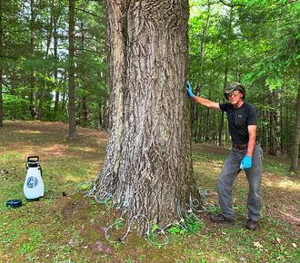 Jim after Macro setup on a large oak tree