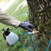 Setting up the Tree Defend Injector on an Ash Tree