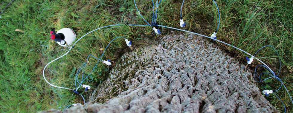 Tree Defend Injector on Large Ash Tree