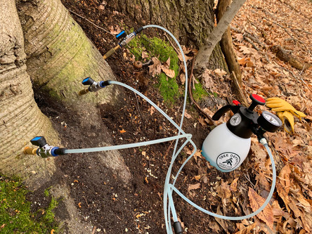 Tree Defend with Brass Valves on Beech Tree