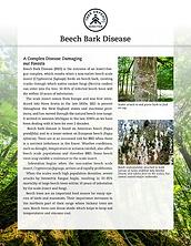 TreeDefend_BeechBarkDisease_Flyer1.png