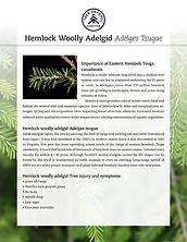 TreeDefend_HemlockWoollyAdelgid_Flyer1.p