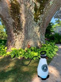 Tree Defend Macro Injector