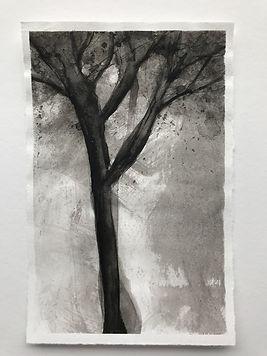 Apple tree 1.JPG