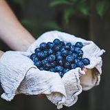 berries-blueberries-bundle-close-up-5450