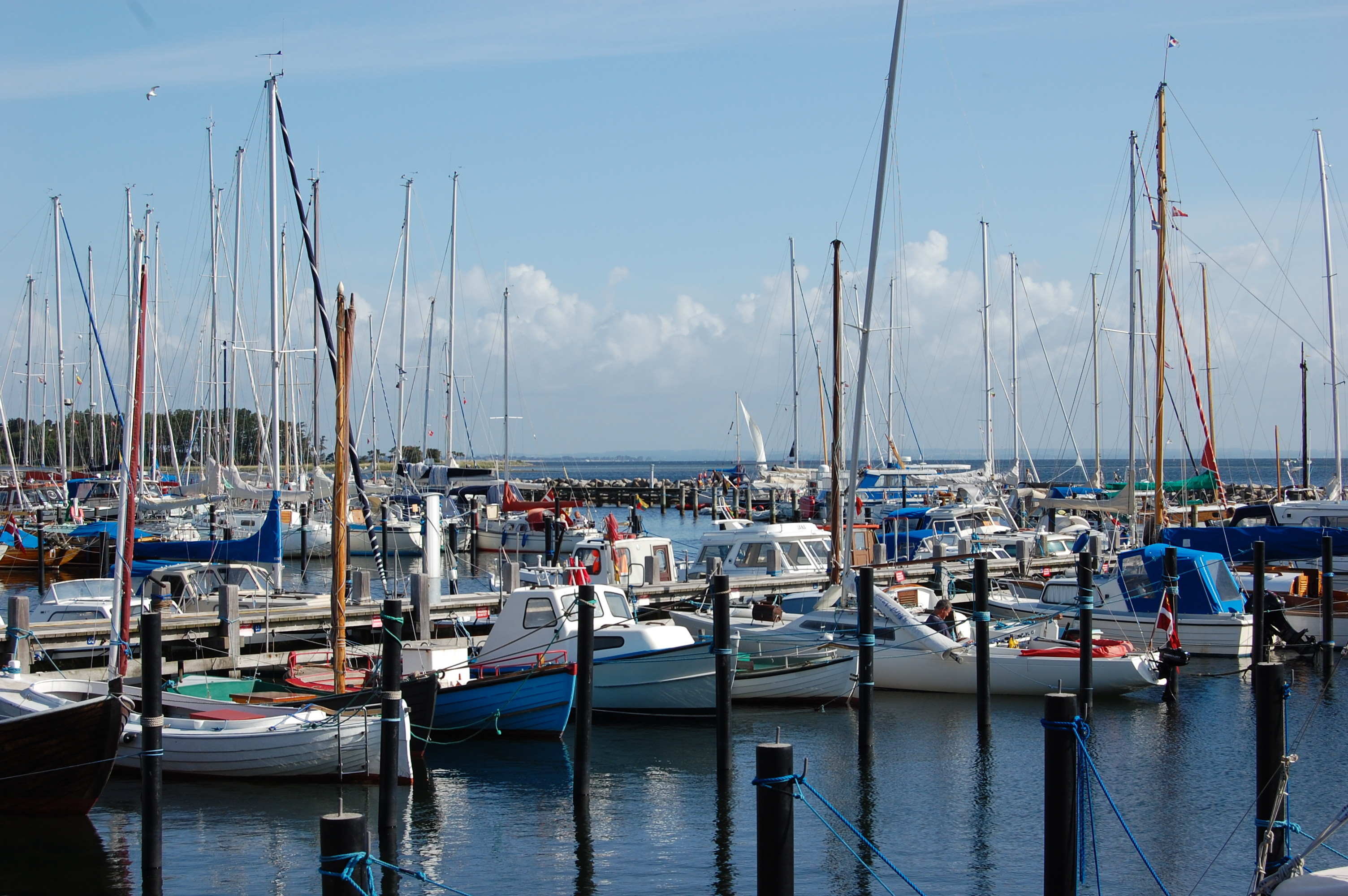 Sailboats docked 2