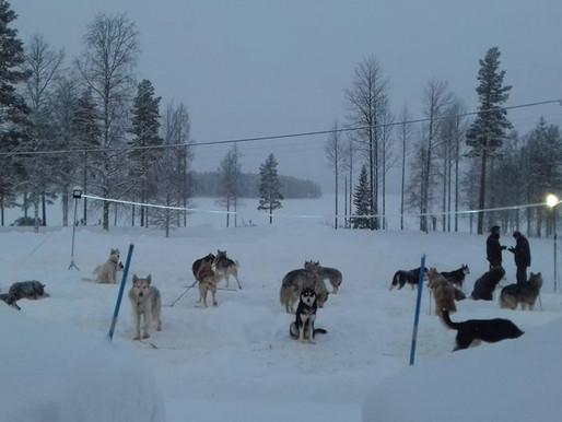 Husky's, sneeuw en alcohol