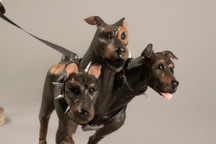Ceili Florence Conway, Cerberus, sculpey
