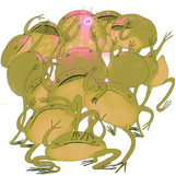 many geguris