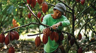 original_cacao.jpg