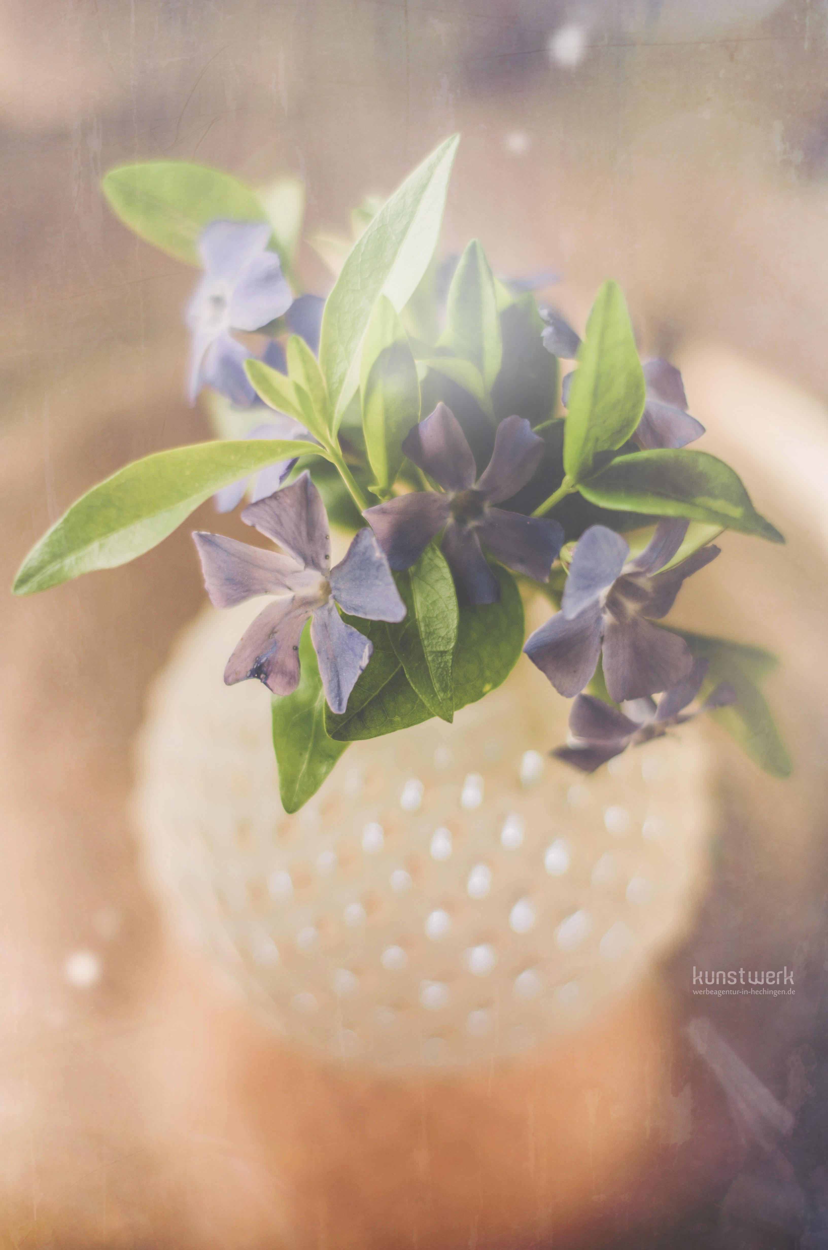 Intime Blüten 65