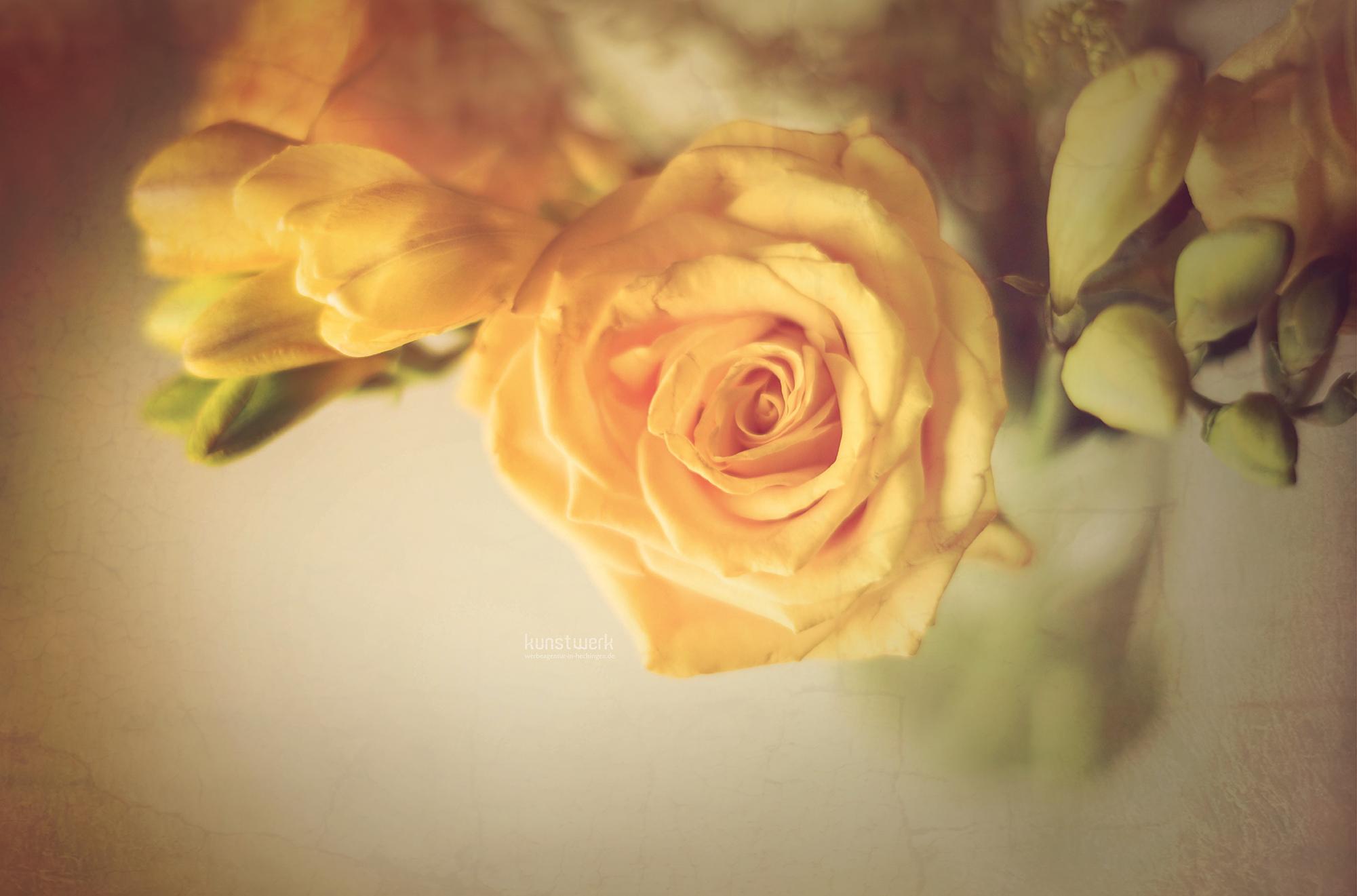 Intime Blüten 1