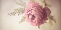 Flowerlove pinkish