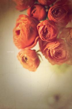 Intime Blüten 3