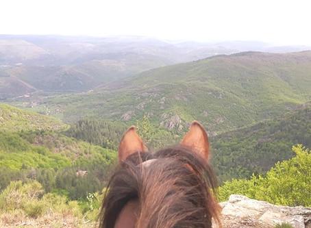 Du 21 au 24 Octobre : Du Mont Lozère au Mont Aigoual par les Cévennes