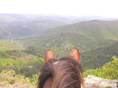 Du 12 au 15 Juin : Du Mont Lozère au Mont Aigoual par les Cévennes