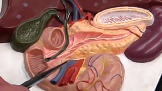 Digestive System P3