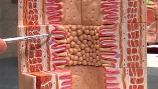 Digestive System P1