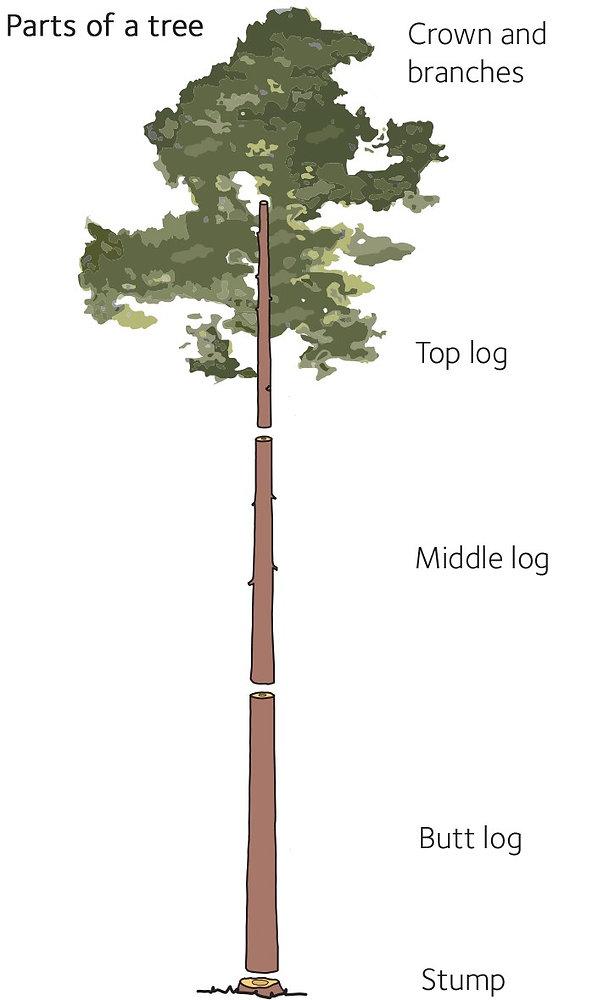 Ağaç Ürün tomruk.jpg