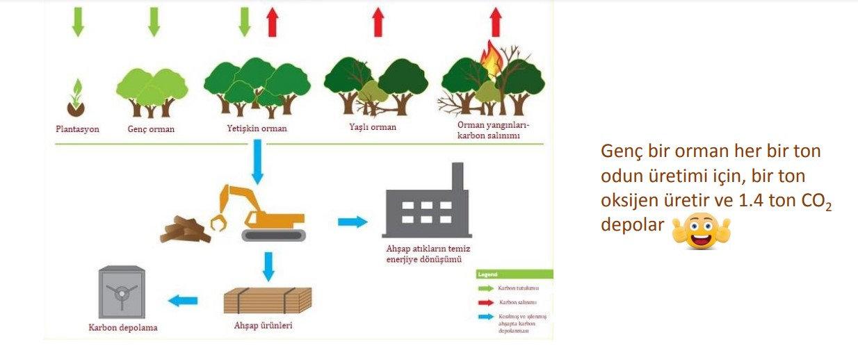 Orman Ahşap Karbon İLİŞKİSİ.jpg