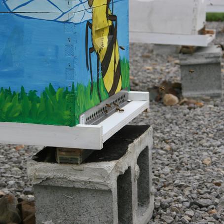Beekeeping in Latin America