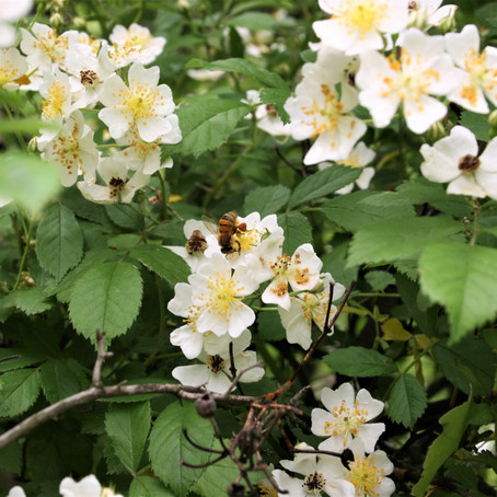 How are Honeybees Related to What We Eat?