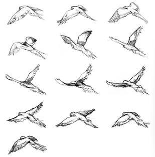 Macaw-study.jpg