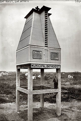 Municipal Bat Roost Texas 1913.jpg