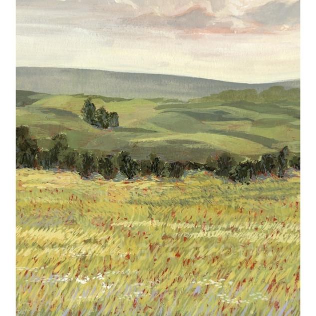 Morning Meadow.jpg