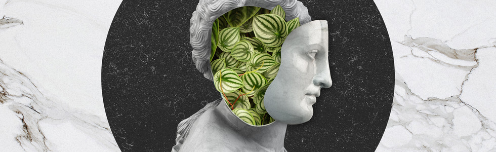 Araceae Venus