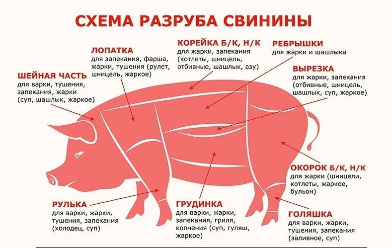 Свин и корова.jpg